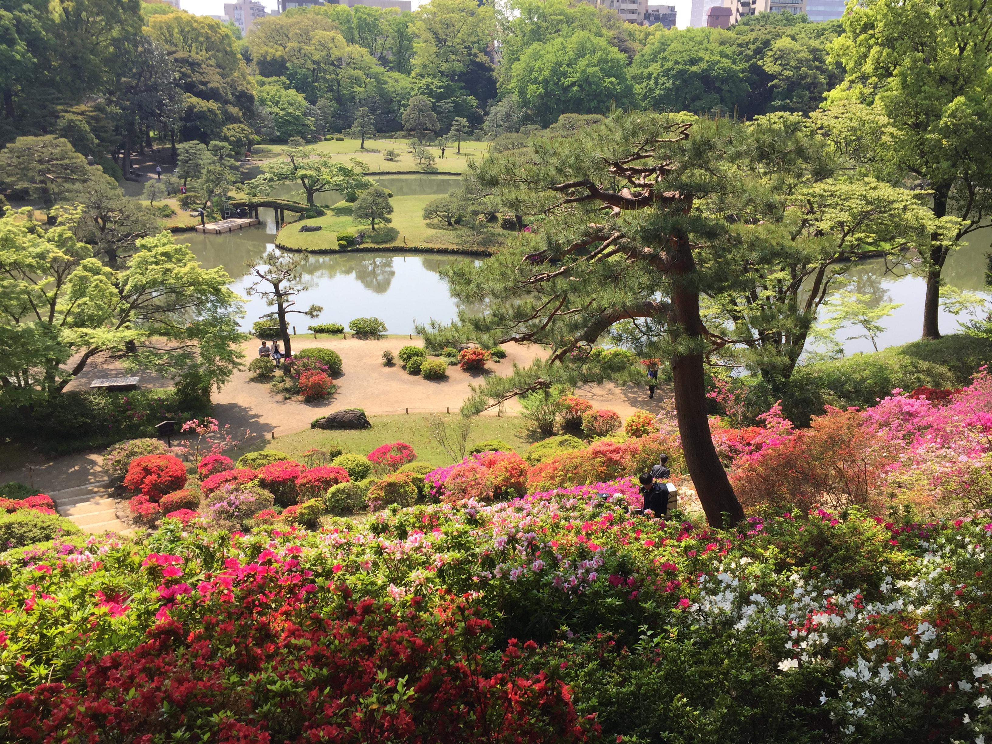 【六義園のつつじ】 和歌山県の和歌浦など、景勝や和歌に詠まれた名勝をモデルに作られた