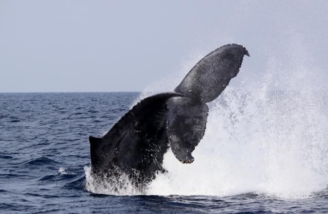捕鯨問題は、いろいろ難しい。私達の問題は、題材こそ違うけれども、根底は似ているような・・・。