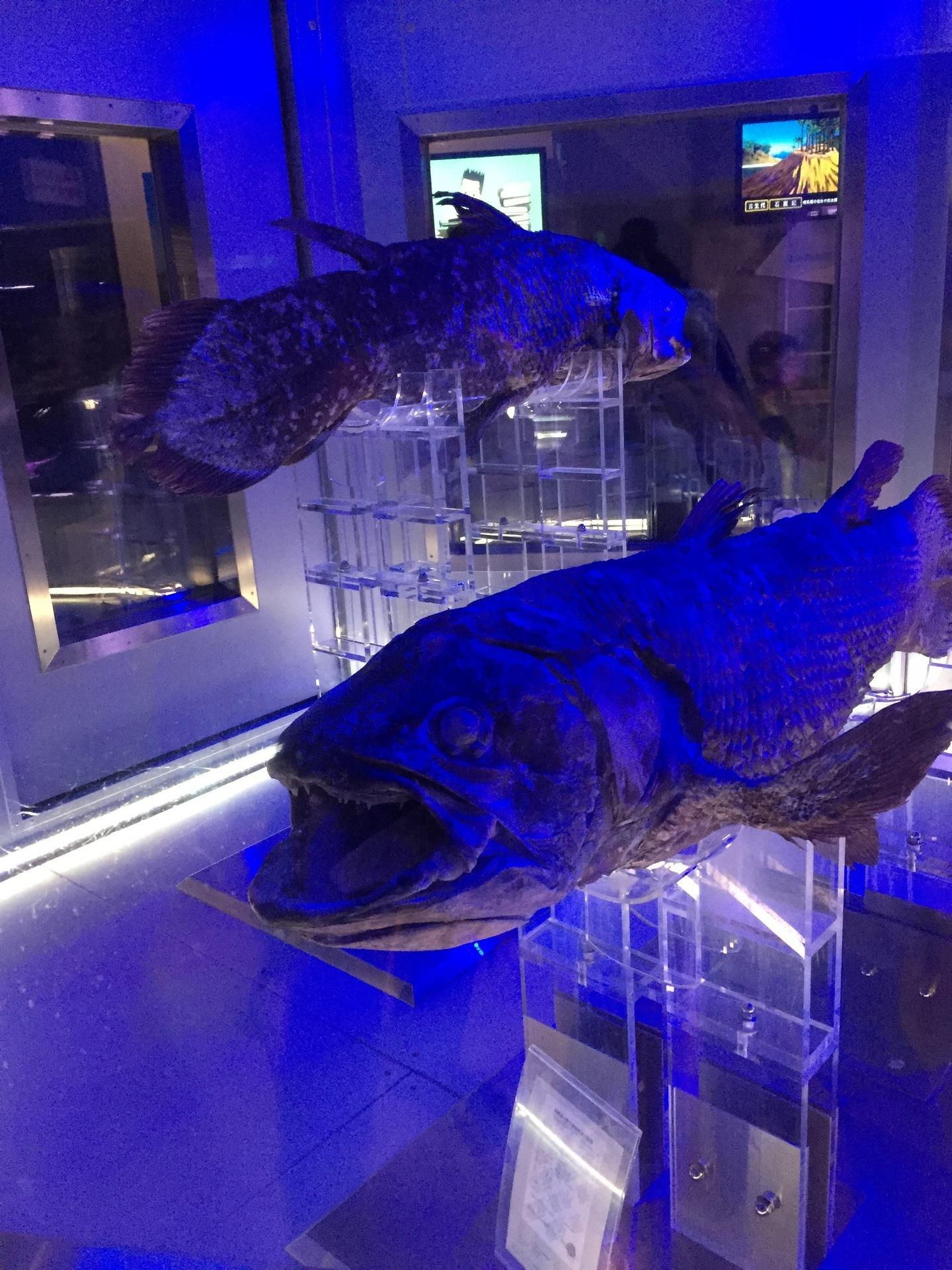 【沼津港深海水族館】 深海魚の水族館。世界にここだけしかない「冷凍シーラカンス」は必見!