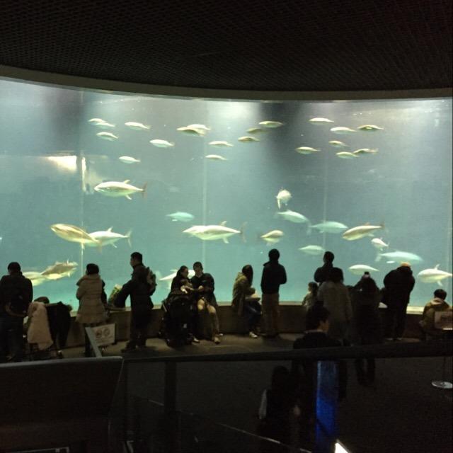 【葛西臨海水族園】 東日本で、最も人気のある水族館。見所はマグロの大水槽!