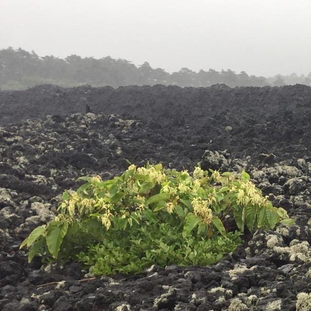 【岩手山 焼走り熔岩流】 280年前に噴火した跡が見られます