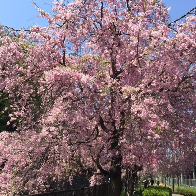 春だなぁ~~~。気持ちが良いなぁ~~。娘とのお散歩で、花や生き物を撮ってきました