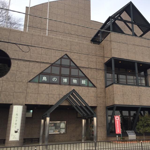 【我孫子市 鳥の博物館】 日本で唯一、鳥類について総合的に研究・展示する博物館です