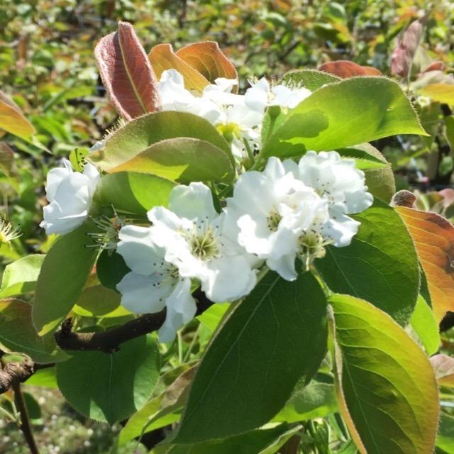 お散歩写真 第二弾。ハナミズキとツツジが咲き、ウグイスが鳴いて、ツバメが子育て。