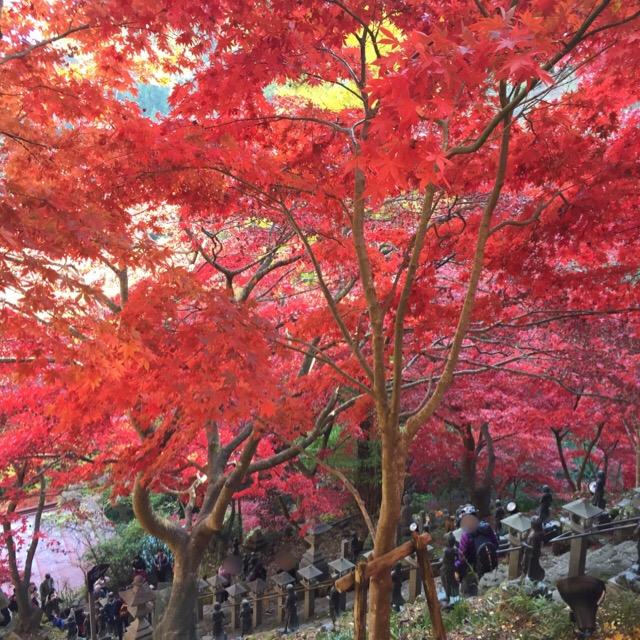 【大山寺(伊勢原市)の紅葉】 「雨降山」とも言われる、標高1251mの山。紅葉が見事!