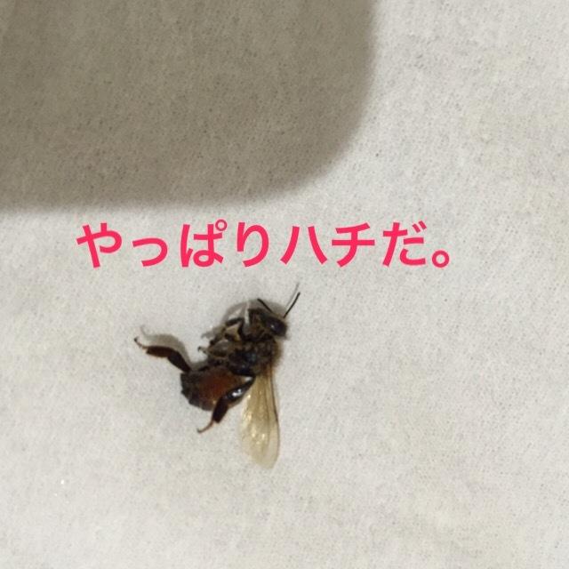 気をつけて! 洗濯物に虫。ハチが室内に・・・。