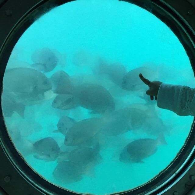 【白浜海中展望塔「コーラルプリンセス」と、海ギリギリの露天風呂「崎の湯」】