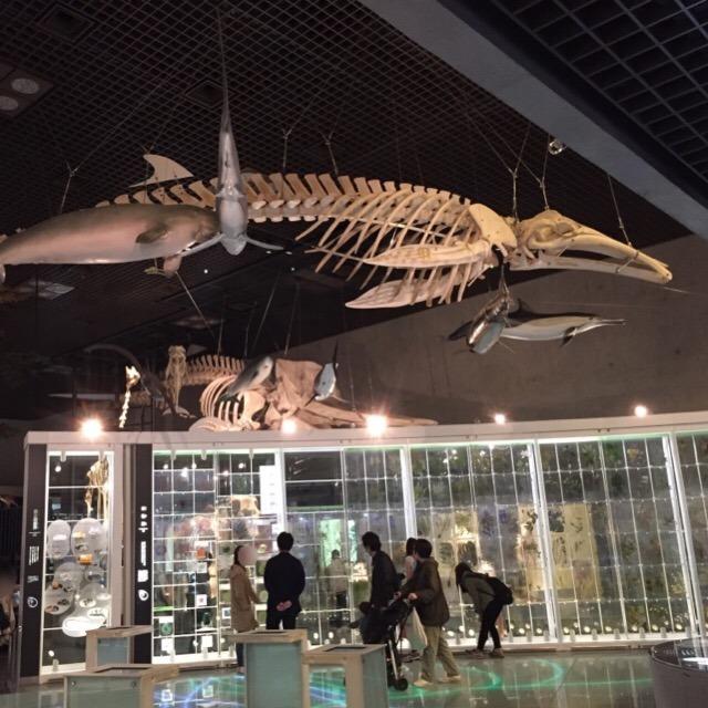 【国立科学博物館】 さすが国立の博物館! 展示が豊富で一日じゃ足りないっ! コンパス体験