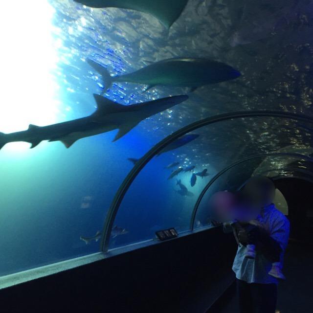 【串本海中公園① 本州最南端の水族館】 世界で初めて、アカウミガメの繁殖に成功した