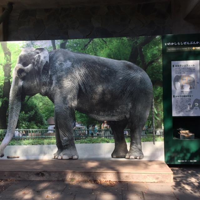 【井の頭自然文化園②】 小さな遊園地つきの動物園(本園)。追悼ゾウのはな子