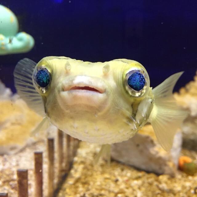【東京タワー水族館】 世界初の観賞魚水族館。小さいけれど見ごたえがある! 2018年9月末で営業終了