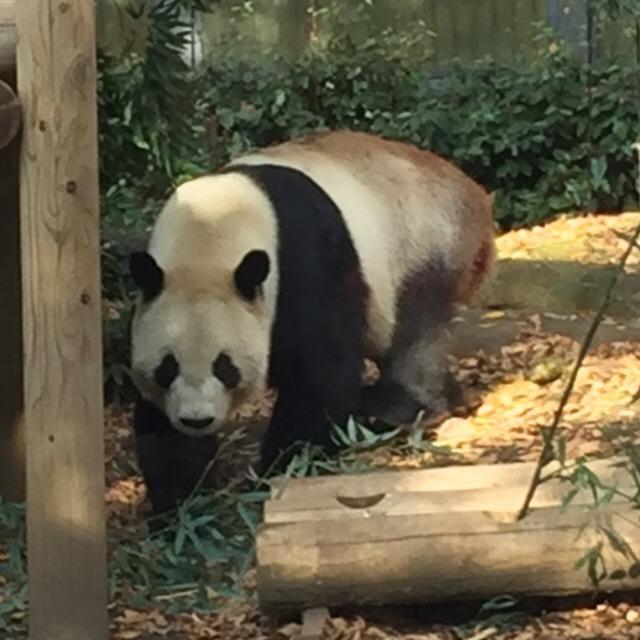 【上野動物園】 世界三大珍獣が見られる、日本最古の動物園。東日本でパンダが見られるのはココだけ!