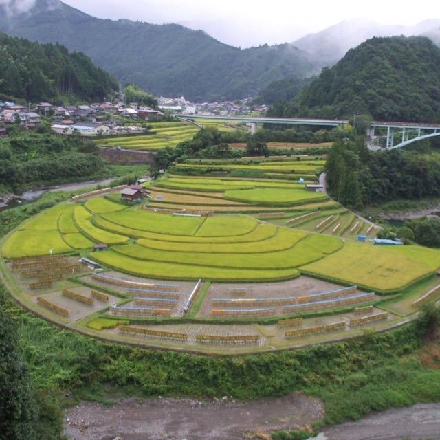 【欄島(あらぎ島)】 江戸初期に開拓された棚田が奇麗!