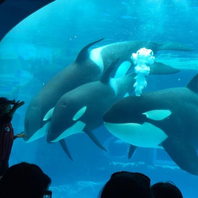 【名古屋港水族館】 公開シャチトレーニングがある。ホラーな展示にビビった