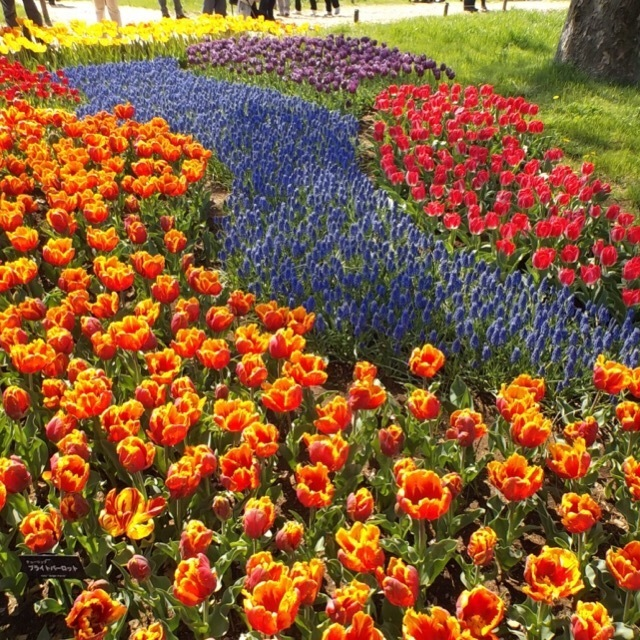 【国営昭和記念公園】 花、イベント、プールなど、一年中楽しめる広大な公園