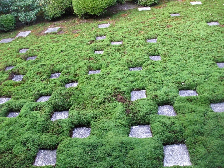 【東福寺(とうふくじ)】 通天橋と本坊庭園。紅葉の名所で大混雑!