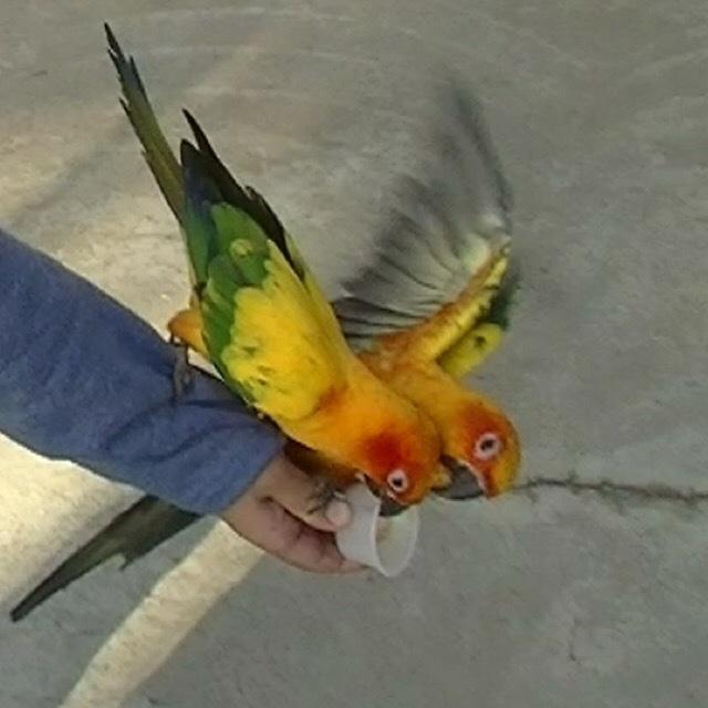 【掛川花鳥園】 鳥とふれあいができるパラダイス! コガネメキシコインコがすごい!