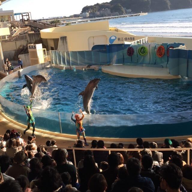 【新江ノ島水族館】 ドルフィリア必見! 人間とイルカが織り成す芸術イルカショー
