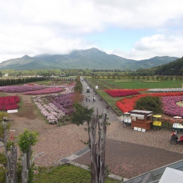 【山中湖、花の都公園】 富士五湖で最大の湖。花の都はヒマワリが美しい!