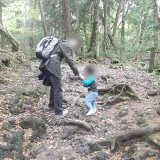【青木ヶ原樹海、東海自然歩道(青木ヶ原自然歩道)】 日本一の原始林で、ハイキングコースがある