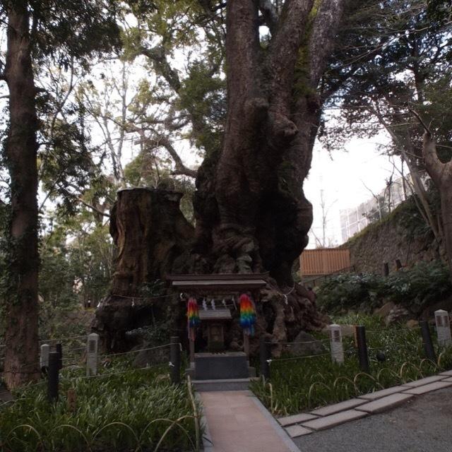 【来宮神社(きのみやじんじゃ)】 樹齢二千年、本州一の巨樹があるパワースポット