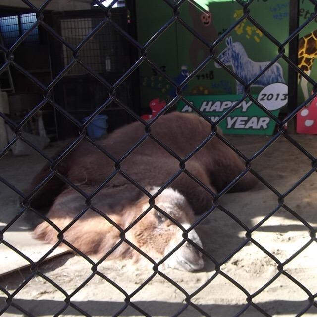 【野毛山動物園】 無料で入れる動物園! 世界最高齢フタコブラクダ「ツガルさん」