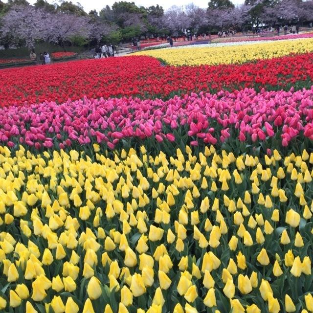 【なばなの里】 チューリップ祭り、イルミネーション、ベゴニア館が美しい!