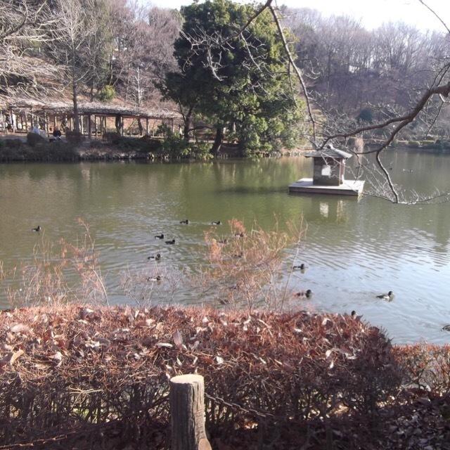 【薬師池公園】 町田リス園とセットでどうぞ。2016年1月かいぼり中