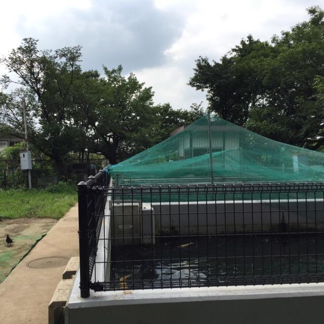 【稲田公園「おさかなポスト」】 タマゾン川にしないための対策