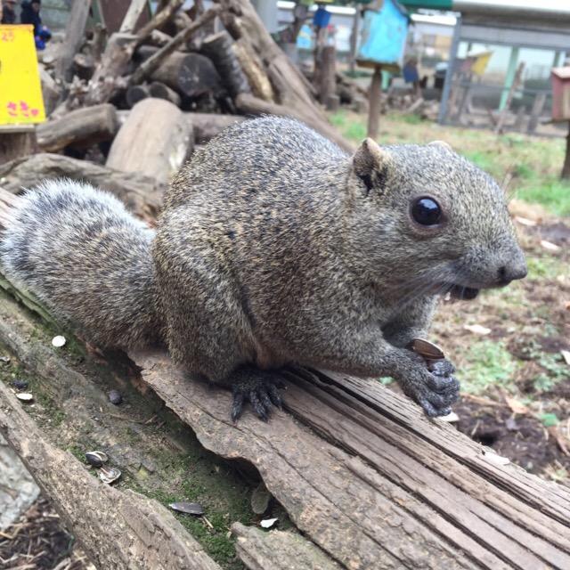 【町田リス園】 めっちゃリスに囲まれる! リス好きにダントツオススメ