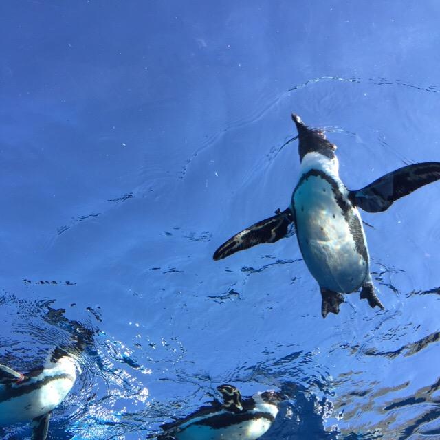 【サンシャイン水族館】リニューアル後の初訪問。天空のペンギンが良かったけど、タエちゃんはどこ?