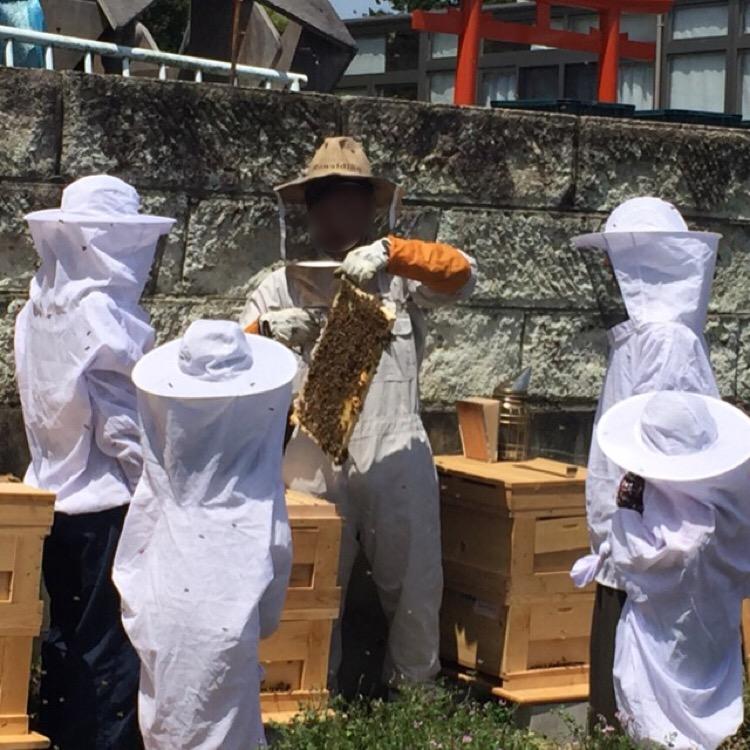 【大丸用水れんげまつり】 稲城のレンゲ祭りで養蜂体験、蜂蜜採取ができる!