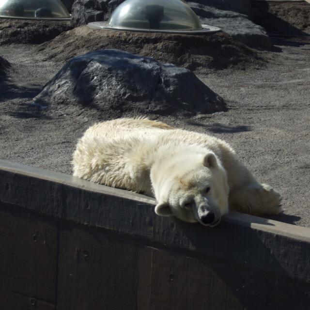 【旭山動物園】 日本最北の動物園で、行動展示の先駆者! 多くの動物園が見習った、素晴らしい動物園