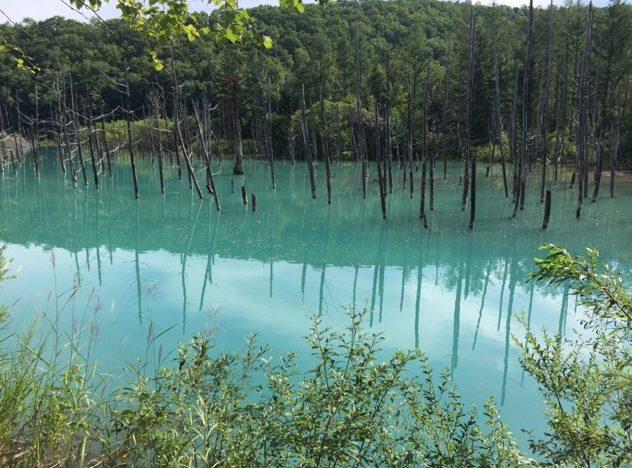 【青い池】 火山災害対策で偶然できた池が、美瑛町を代表する観光地になった。訪れるなら朝がオススメ!