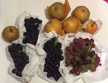 【上原園(東京都 稲城市)】 梨狩り、ブドウ狩りをして、秋の味覚を楽しもう