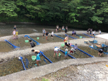 【小松沢レジャー農園】 夏休みファミリー体験プランで、魚とカブトムシを捕獲! 秋はブドウ狩りも楽しめる!